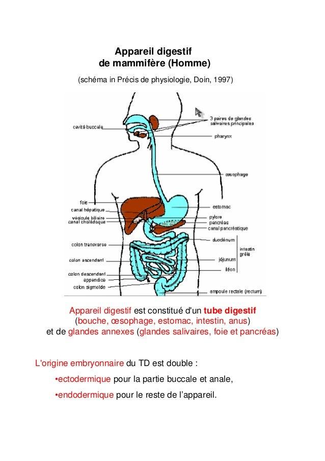 Erfreut Essentielle Anatomie 2 Galerie - Anatomie Ideen - finotti.info