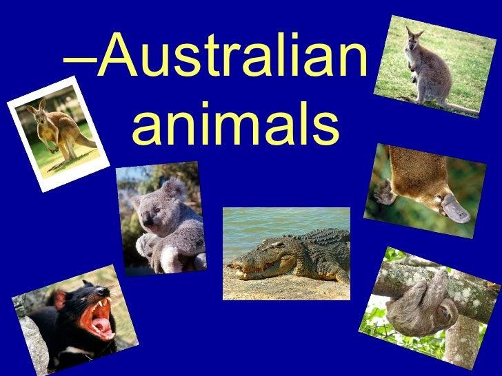 <ul><ul><li>Australian   animals </li></ul></ul>