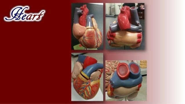 I Love Anatomy Ilana Kovach