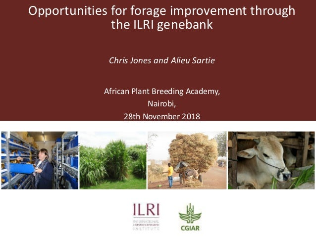 Opportunities for forage improvement through the ILRI genebank Chris Jones and Alieu Sartie African Plant Breeding Academy...
