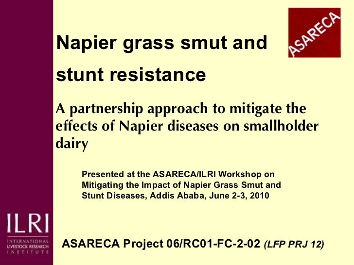 Napier grass smut and  stunt resistance ASARECA Project 06/RC01-FC-2-02  (LFP PRJ 12)   A partnership approach to mitigate...