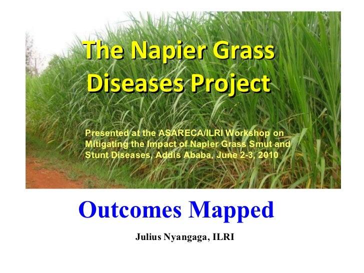 The Napier Grass Diseases Project Julius Nyangaga, ILRI Outcomes Mapped  Presented at the ASARECA/ILRI Workshop on Mitigat...