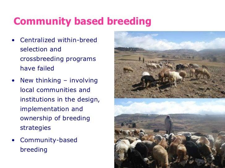 Designing community-based breeding strategies for indigenous sheep breeds of smallholders in Ethiopia Slide 2