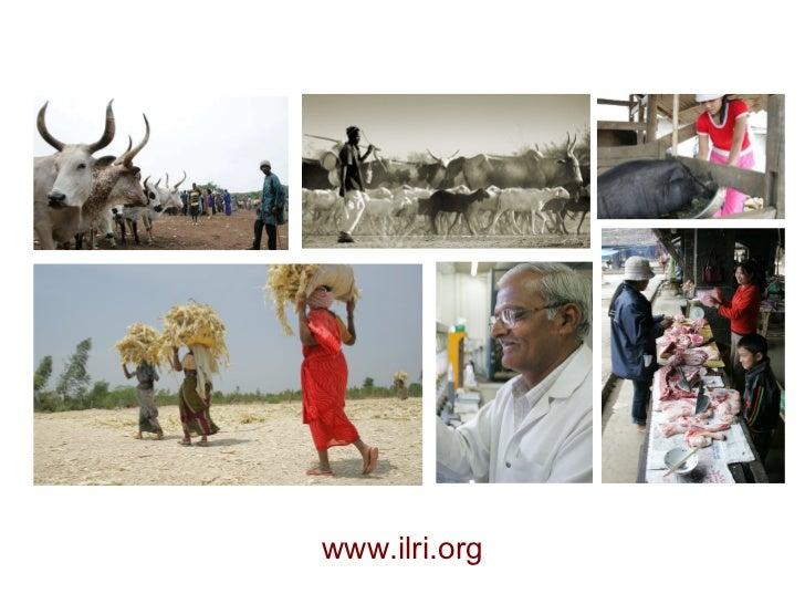 www.ilri.org