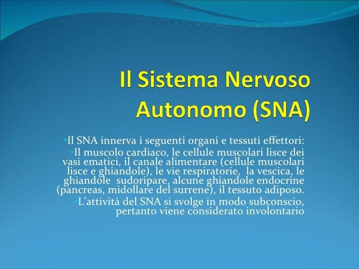<ul><li>Il SNA innerva i seguenti organi e tessuti effettori: </li></ul><ul><li>Il muscolo cardiaco, le cellule muscolari ...