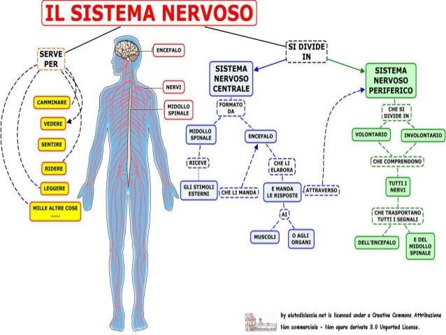 Il Sistema Nervoso Francesca