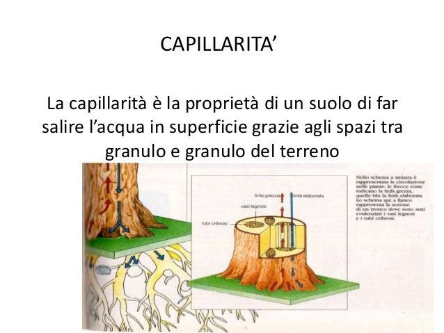 Il suolo for Utensili per prelevare campioni di terreno