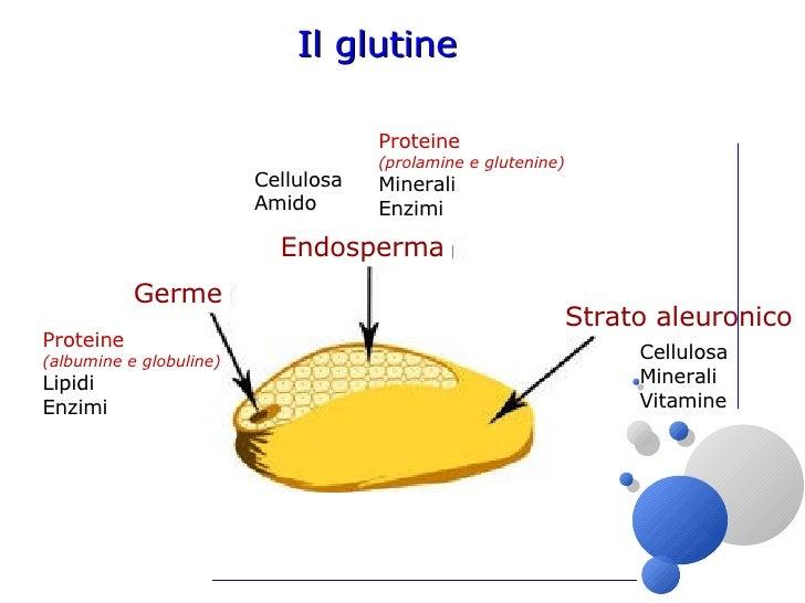 dove si trova il glutine