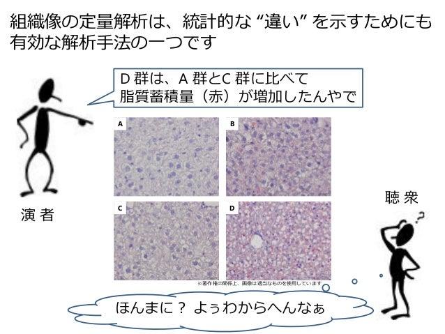 Image J を用いた組織像の定量解析 Slide 2
