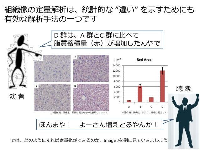 Image J を用いた組織像の定量解析 Slide 3