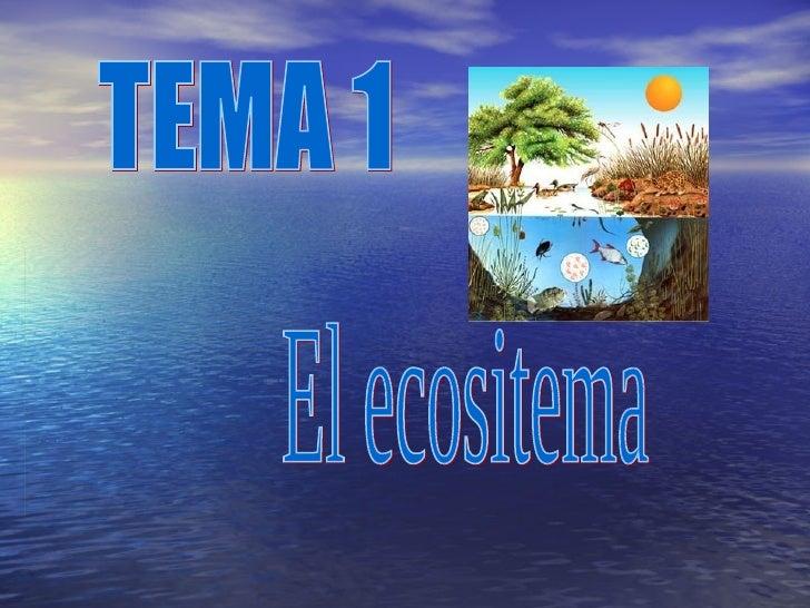 El ecositema TEMA 1
