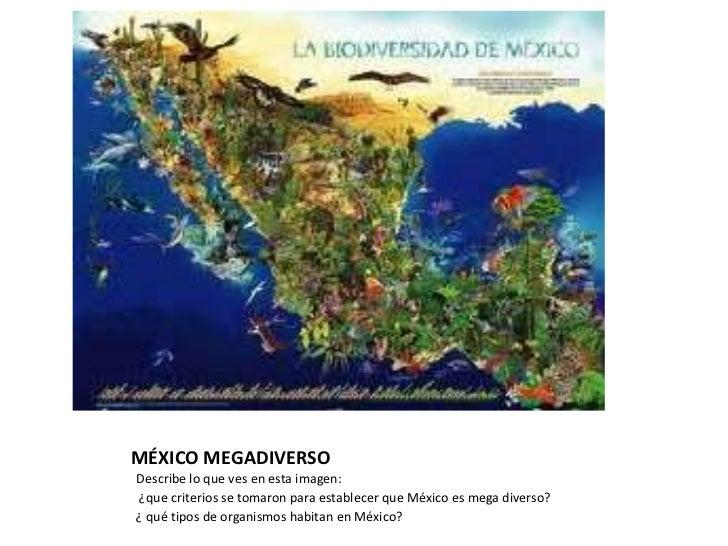 MÉXICO MEGADIVERSO<br />Describe lo que ves en esta imagen:<br /> ¿que criterios se tomaron para establecer que México es ...