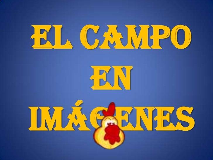 El Campo    enImágenes