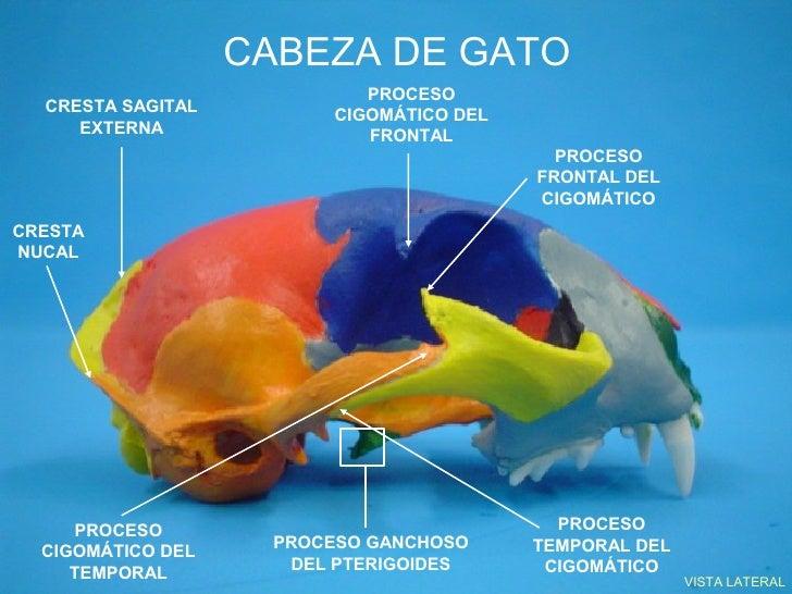 Imagenes de la cabeza