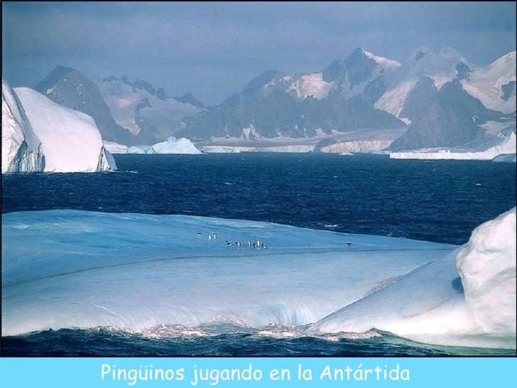 Pingüinos jugando en la Antártida