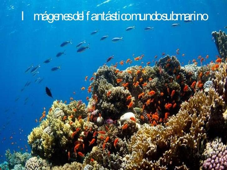 Imágenes del fantástico mundo submarino
