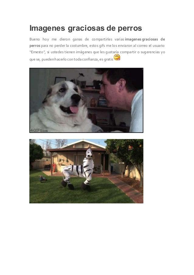 Imagenes graciosas de perros Bueno hoy me dieron ganas de compartirles varias imagenes graciosas de perros para no perder ...