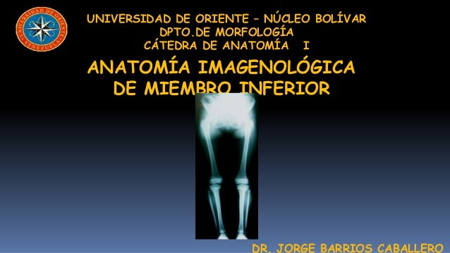 UNIVERSIDAD DE ORIENTE – NÚCLEO BOLÍVAR          DPTO.DE MORFOLOGÍA        CÁTEDRA DE ANATOMÍA IANATOMÍA IMAGENOLÓGICA  DE...