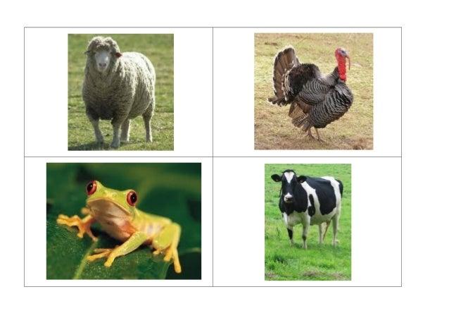 Imagens reais de animais