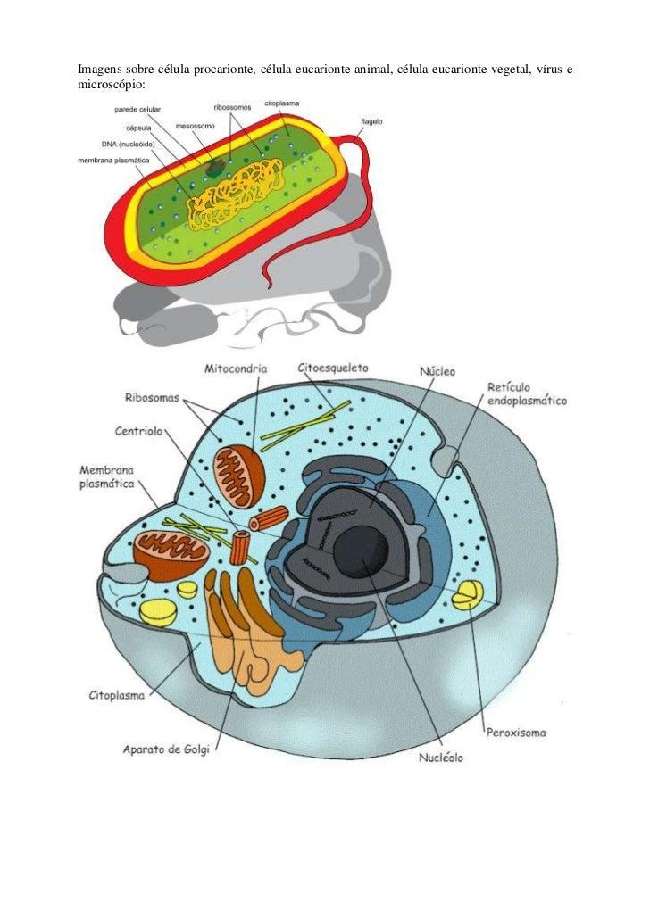 Imagens sobre célula procarionte, célula eucarionte animal, célula eucarionte vegetal, vírus e microscópio:<br />