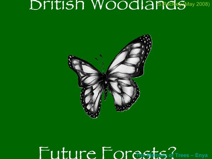 British Woodlands Future Forests? The Memory of Trees –  Enya (Right click to open  iTunes ) S.Rackley (May 2008)