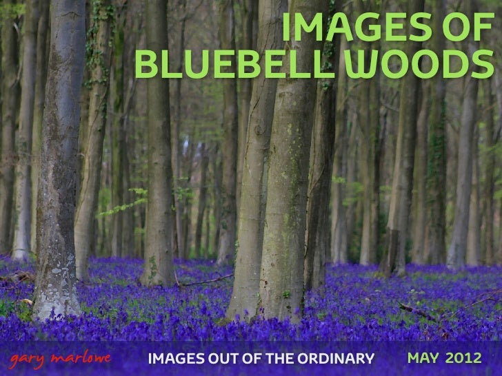 IMAGES OF                   BLUEBELL WOODS    gary marlowe   IMAGES OUT OF THE ORDINARY   MAY 2012