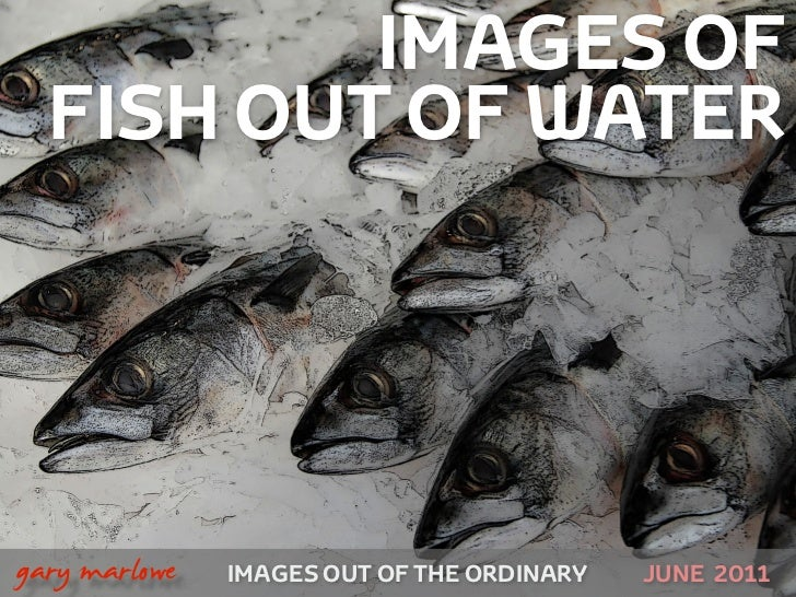 IMAGES OF      FISH OUT OF WATER!    gary marlowe   IMAGES OUT OF THE ORDINARY   JUNE 2011