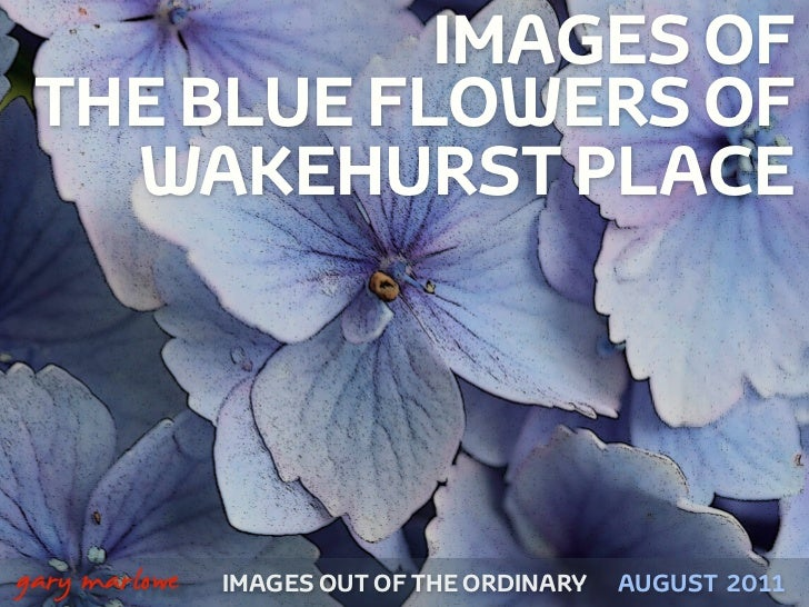 IMAGES OF     THE BLUE FLOWERS OF       WAKEHURST PLACE!    gary marlowe   IMAGES OUT OF THE ORDINARY   AUGUST 2011
