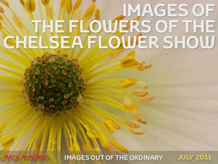 IMAGES OF      THE FLOWERS OF THE    CHELSEA FLOWER SHOW!    gary marlowe   IMAGES OUT OF THE ORDINARY   JULY 2011