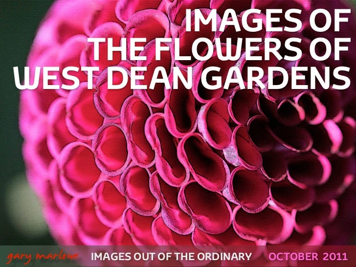 IMAGES OF       THE FLOWERS OF    WEST DEAN GARDENS!    gary marlowe   IMAGES OUT OF THE ORDINARY   OCTOBER 2011