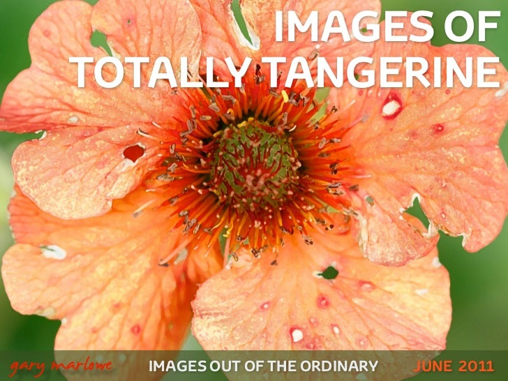 IMAGES OF          TOTALLY TANGERINE!    gary marlowe   IMAGES OUT OF THE ORDINARY   JUNE 2011