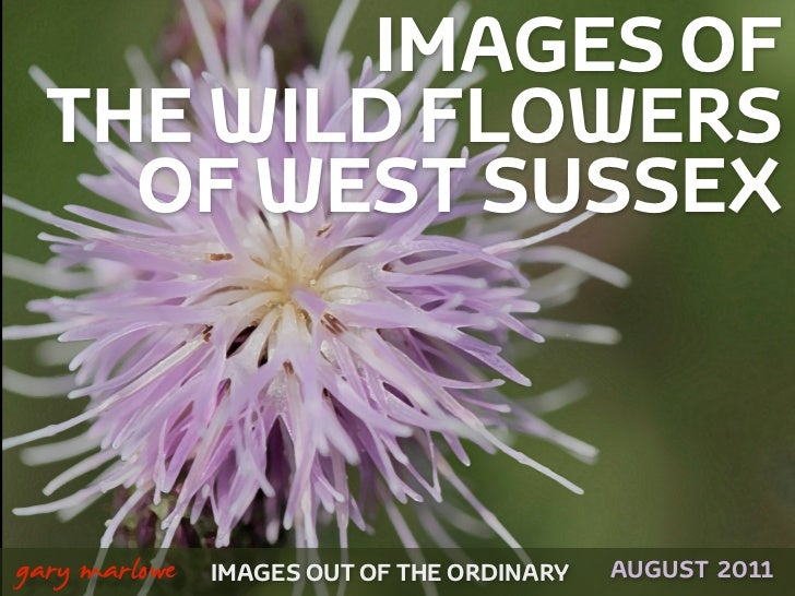 IMAGES OF      THE WILD FLOWERS        OF WEST SUSSEX!    gary marlowe   IMAGES OUT OF THE ORDINARY   AUGUST 2011