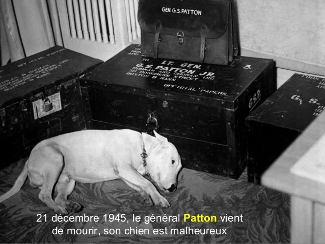 21 décembre 1945, le général Patton vient de mourir, son chien est malheureux