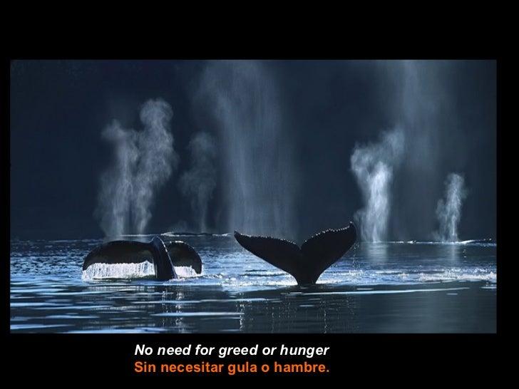 No need for greed or hungerSin necesitar gula o hambre.