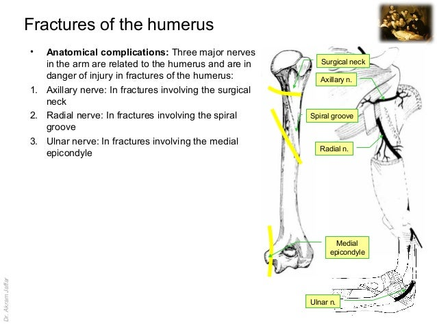 Imaging Anatomy Fractures Of The Humerus