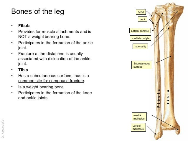 Imaging anatomy injuries of the leg and foot