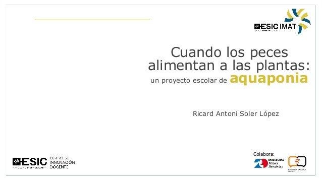 Colabora: Cuando los peces alimentan a las plantas: un proyecto escolar de aquaponia Ricard Antoni Soler López