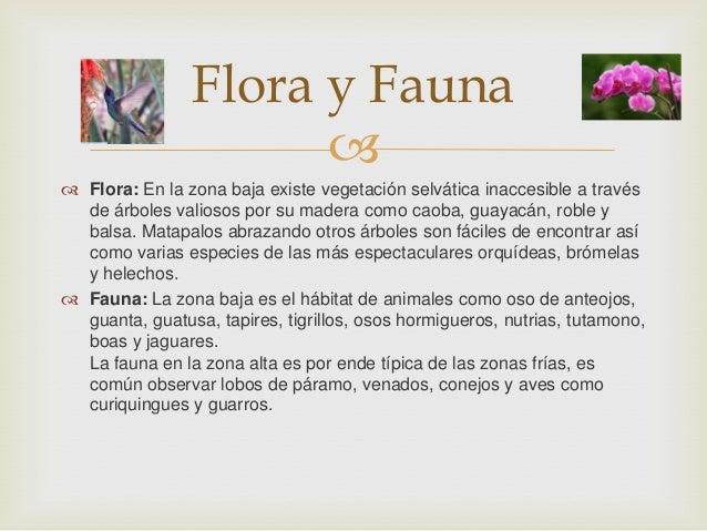   Flora: En la zona baja existe vegetación selvática inaccesible a través de árboles valiosos por su madera como caoba, ...