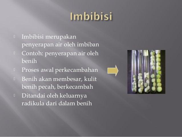 Imbisisi Slide 2