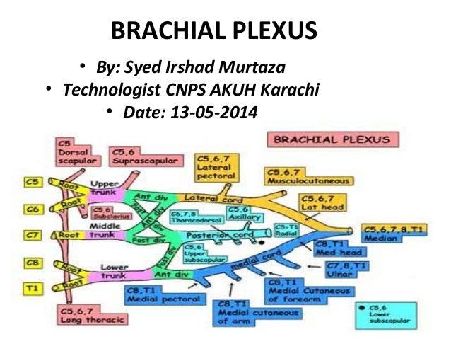 BRACHIAL PLEXUS  • By: Syed Irshad Murtaza  • Technologist CNPS AKUH Karachi  • Date: 13-05-2014