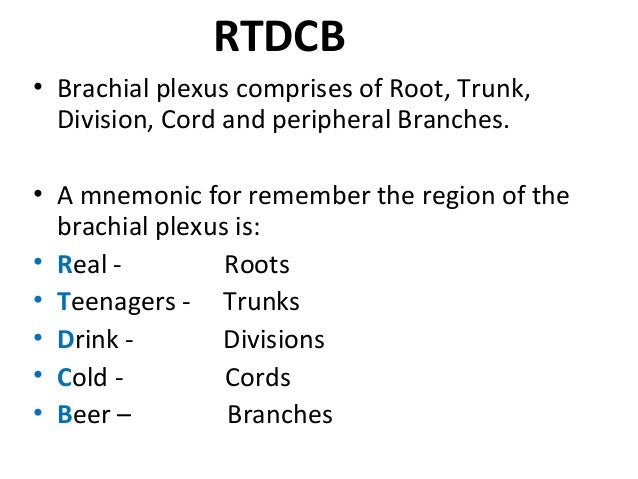 Brachial Plexus Subway Map.Brachial Plexus Mnemonic Mara Yasamayolver Com