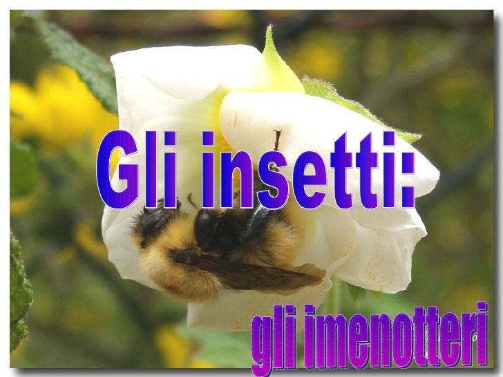 Gli insetti: gli imenotteri