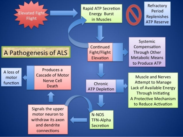 ALS: Regulation model of amyotrophic lateral sclerosis