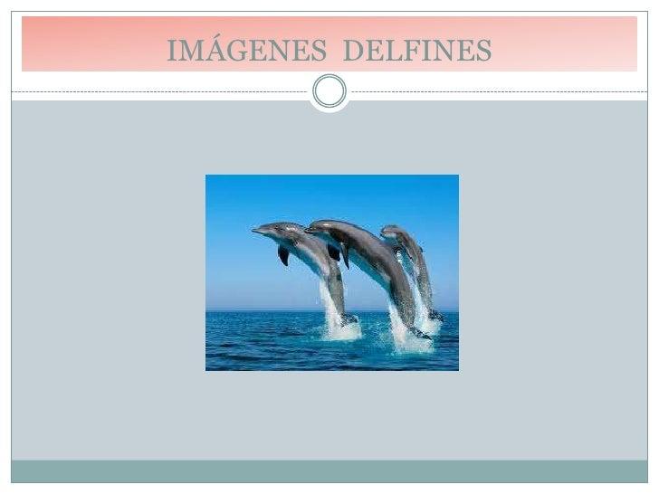 IMÁGENES DELFINES<br />