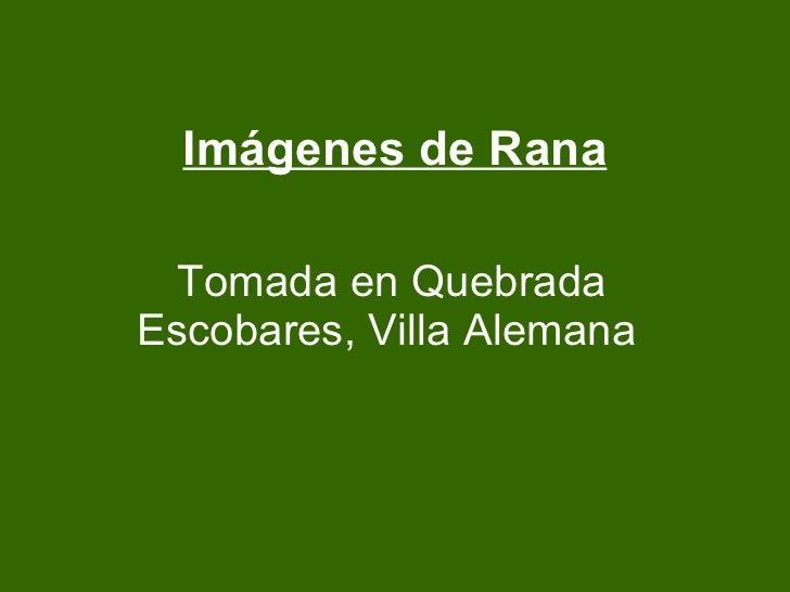 Imágenes de Rana Tomada en Quebrada Escobares, Villa Alemana