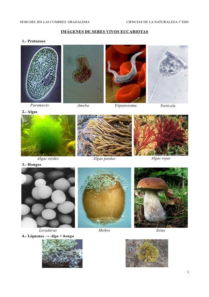 Imágenes De Seres Vivos Eucariotas