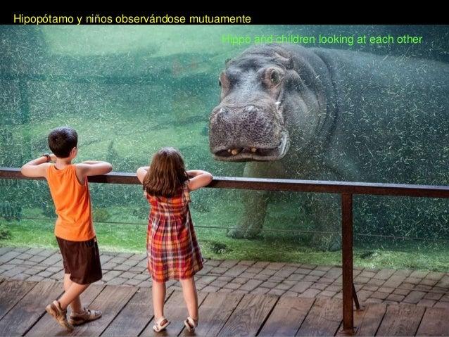 Hipopótamo y niños observándose mutuamenteHippo and children looking at each other