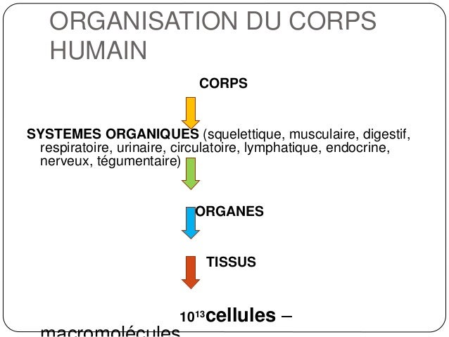 introduction physiologie partie1