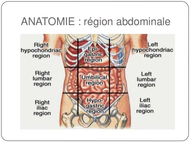 Famous Anatomie De L Abdomen Adornment - Internal organs diagram ...