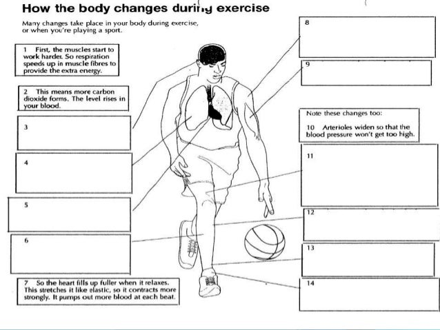 effects of exercise on different body The long and short term effects of exercise  the short-term effects of exercise usually begin before  exercise affects the body systems in many different.